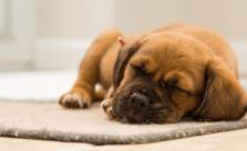 Stap nu over naar de huisdierenverzekeringen van Petplan en ontvang een kortingsbon van 50 euro. © Torsten Dettlaff